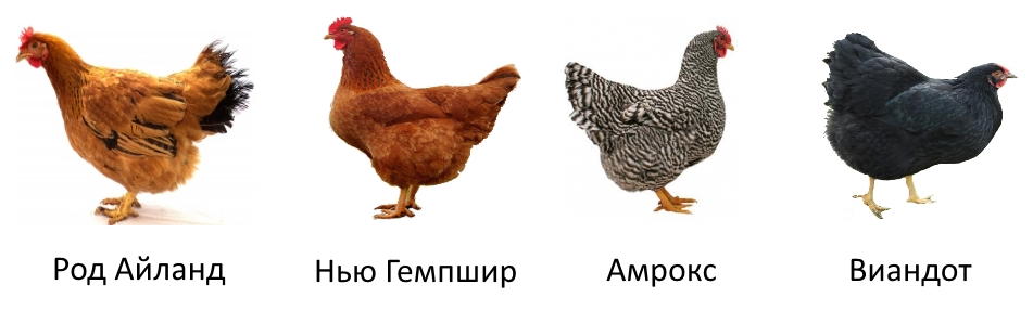 Мясояичные породы